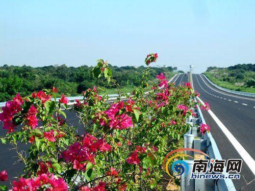 如今,海屯高速中央分隔带上的三角梅、大红花、红桑等品种花开正艳,把高速公路点缀成一条景观长廊。(南海网记者李晓梅摄)