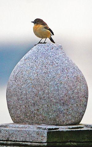 海甸溪北岸,一只小鸟在护栏上栖息。海南日报记者 李英挺 摄