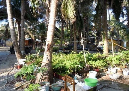 椰树掩映下的渔村,宁静而悠闲,希望将来开发旅游了,不要把它变成一片饭馆和旅游纪念品超市。