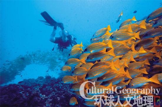 南海的捕鱼速度远远超过繁殖速度