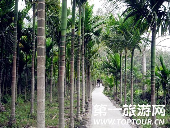 在槟榔林中骑行感觉真的不错。