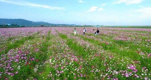 三亚海棠湾花的海洋