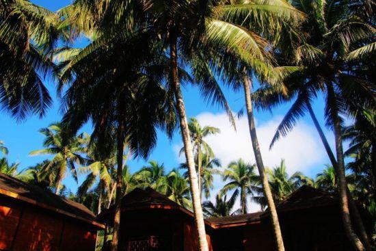 走进海边的椰子树林,一排排充满热带风情的小木屋掩映其中 佛进入了那传说中的伊甸园