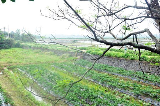 田心村绿色长廊
