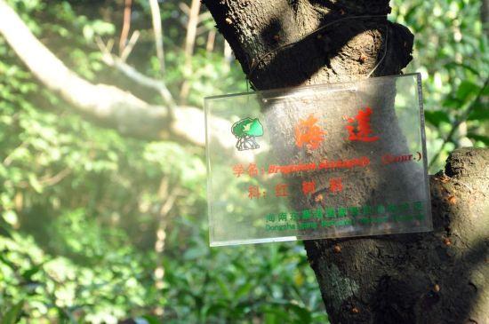 我国第一个红树林保护区