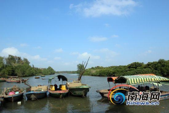 宁头村的东寨港红树林码头(南海网记者陈望摄)