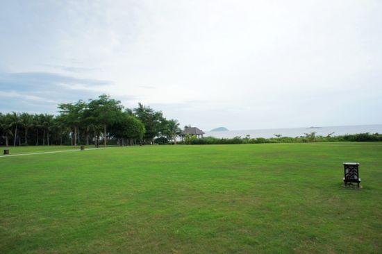 红树林草坪,通往海边。