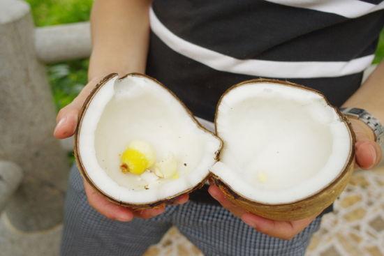 这种椰子比较好吃