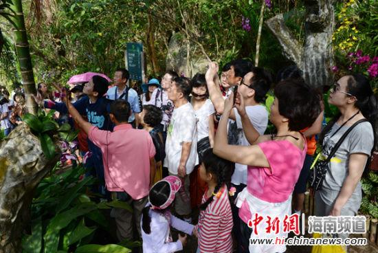 图为节后错峰游的游客在亚龙湾热带天堂森林旅游区参观游览的情景。(黄庆优摄)