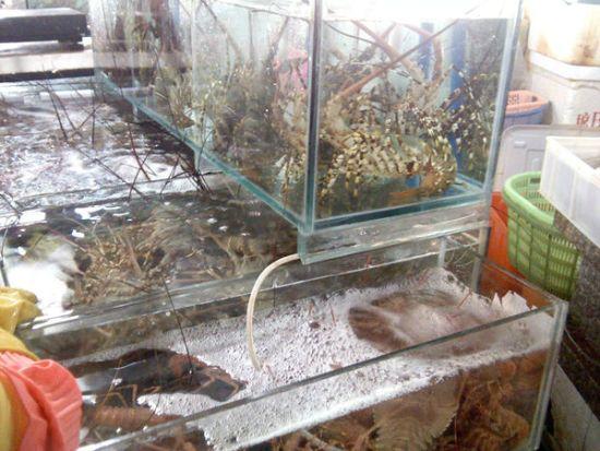 龙虾(⊙o⊙)