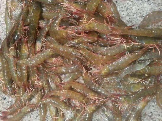 偌大的海鲜市场,怎么可能没有虾呢?