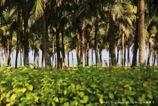 ▲02、海边椰林