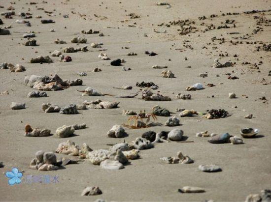 沙滩有很多小蟹,总是偷偷摸摸的