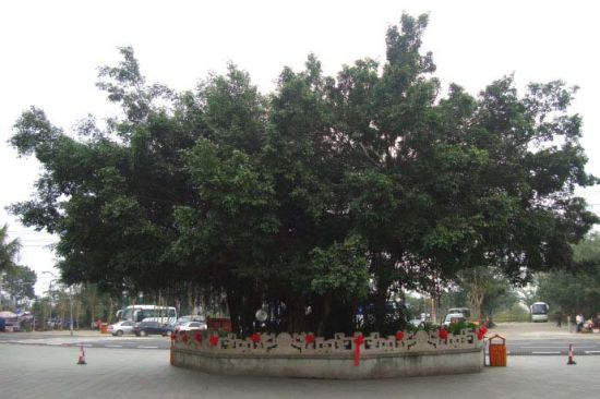 海南的大榕树比比皆是,每次看到都忍不住举起相机