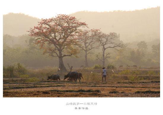 田间的牛和人