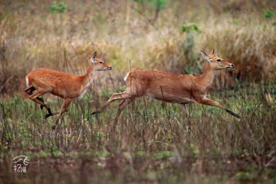 小鹿跟大鹿