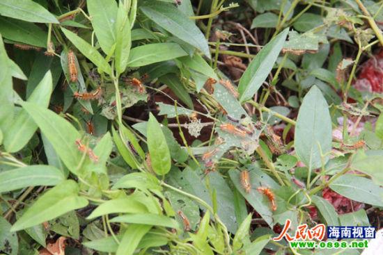 背景 壁纸 绿色 绿叶 树叶 植物 桌面 550_367