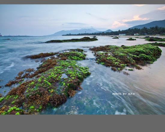 绿意盎然的海滩