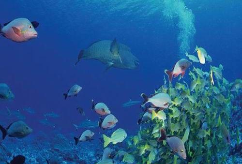 深海里的鱼