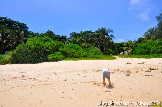 沙滩、阳光、海水,还有正在玩乐的小熊,在大自然中显得一切那么的和谐
