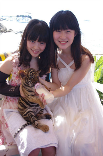虎爸虎妈和虎妞。小老虎好可爱啊,真的和猫咪一样。
