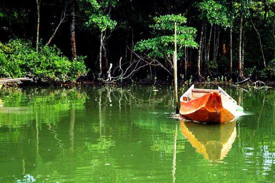 东寨港红树林 留在陆地上的碧浪(组图)(2)