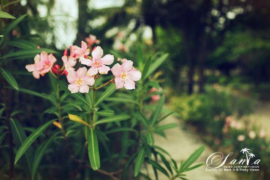 青春是朵不凋零的花。