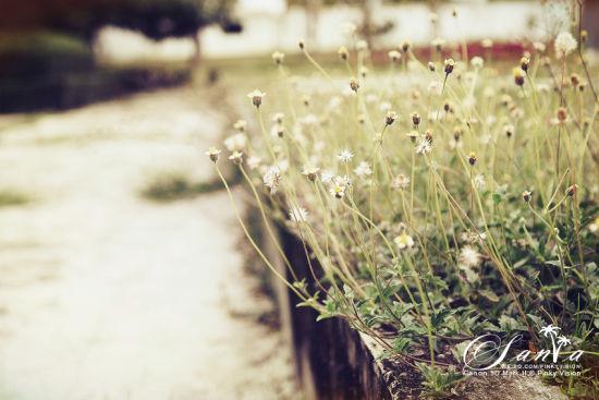 路边疯长的小花们。