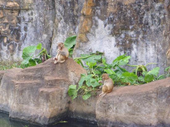园内的猴子