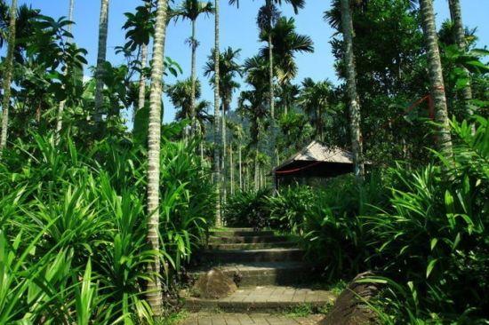 呀诺达热带雨林文化旅游区