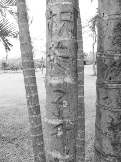 """网友微博引发""""游客刻字留念""""大讨论,记者走访海南省景区发现许多植物、雕塑遭""""毒手"""""""