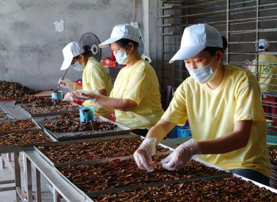定安槟榔系列产品