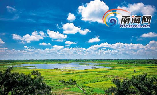 5月31日,海口市城西镇薛村白水塘湿地。 本报记者 李幸璜 摄