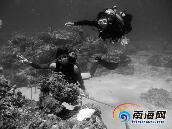 在海南潜水是外省游客来琼的重要旅游消费项目之一。本报记者张杰摄
