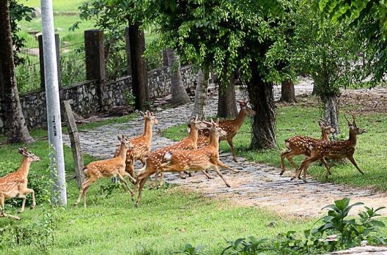 鹿群在鹿场欢欣奔跑