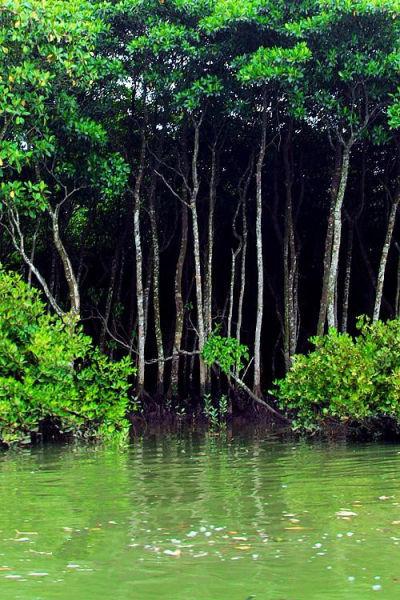 绿树衬碧水