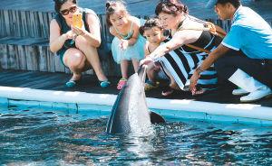 暑期已至,亲子游搅热海南旅游市场。图为家长陪同孩子在陵水分界洲岛的海豚湾与海洋动物亲密接触。记者 张杰 通讯员 童国强 摄