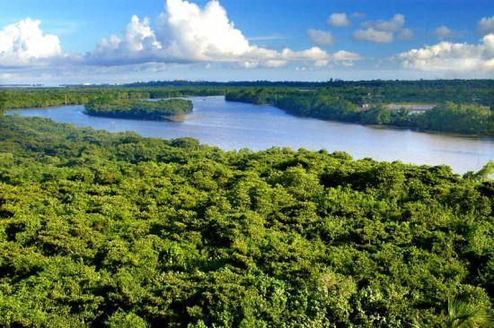 鸟瞰红树林