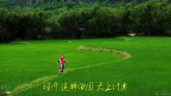 什寒村美丽景象(图片为新浪网友@海南一明提供)