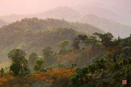 晨曦里的山林
