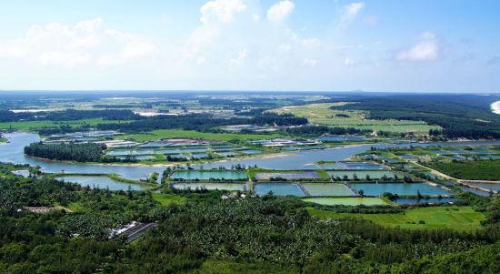 俯瞰附近的稻田
