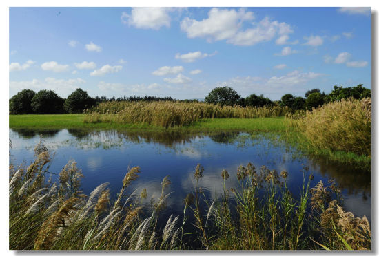 湿地中央的水面平静的像一面镜子(摄影:在水一芳)