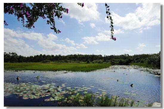 湿地由于尚未被完全开发而呈现出原生态的美丽