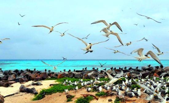 壮观的群鸟聚集地