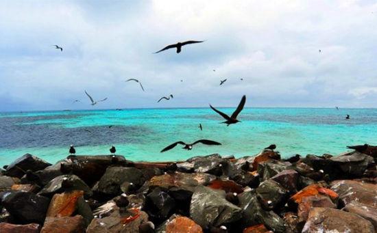 海,鸟群与礁石构成一幅画