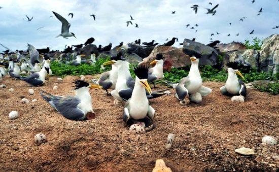 动画片里才能看到的鸟正在孵蛋   蓝天如洗、碧波万顷的南海,一直是国人旅游的梦想地之一。作为
