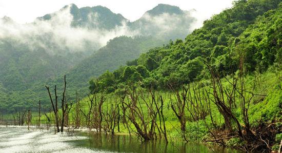 水底的枯木顽强地保留着生命蓬勃时的状态