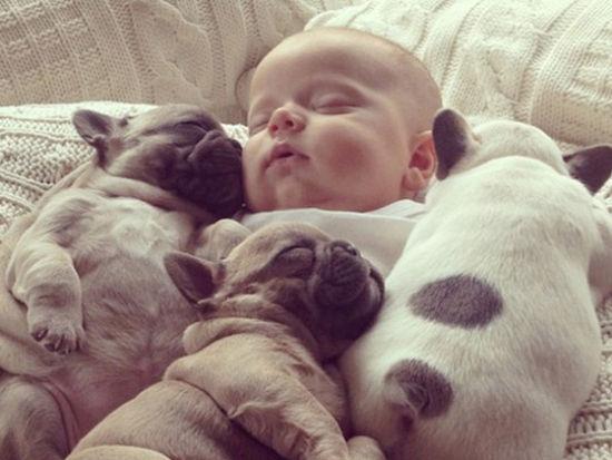 斗牛犬幼崽与新生儿相亲相爱的宝贝们