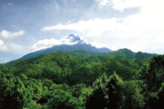 五指山热带雨林风景区还集中了热带山地雨林和