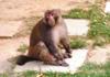 猕猴现身北京市区